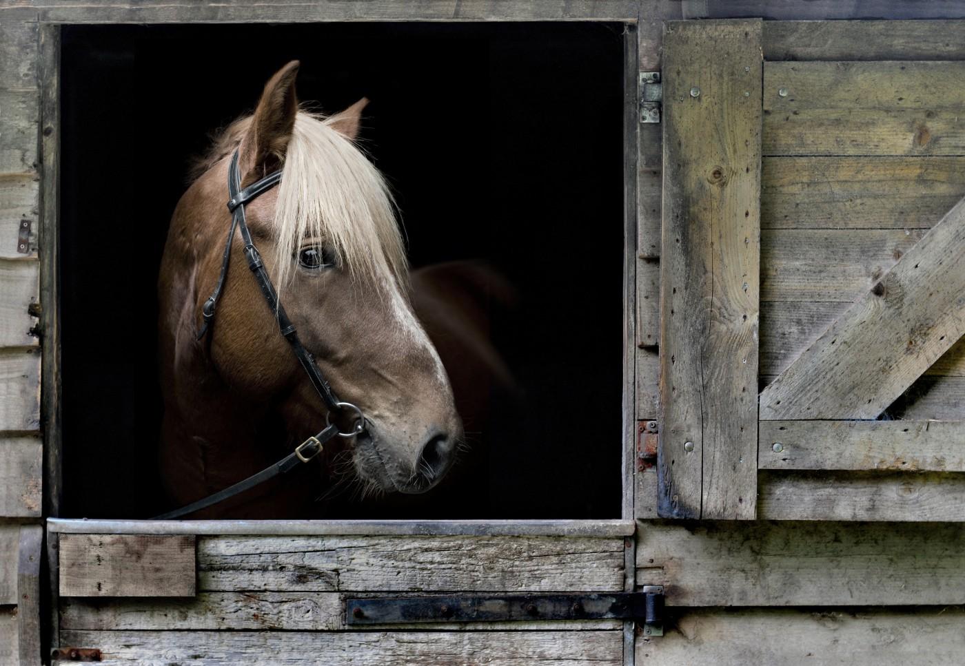 Paard in box monochroom